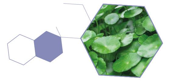 Centella-asiatica-bio